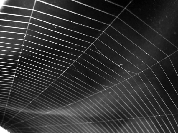 Going out with a bang Spider web
